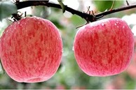 Táo cũng được chia thành quả đực và quả cái! Hãy ghi nhớ 4 mẹo này, bạn sẽ chọn đc quả táo giòn, ngọt và mọng nước