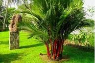 4 loại cây là 'mèo Thần Tài', đặt ở đâu là gọi lộc lá về ở đó