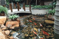 Làm hồ cá trong sân nhà hình gì thì có thể phát tài?