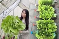 Rắc muối lên vườn rau quanh nhà, con dâu khiến mẹ chồng 'mở mang tầm mắt' khi thấy rau xanh non mỡ màng